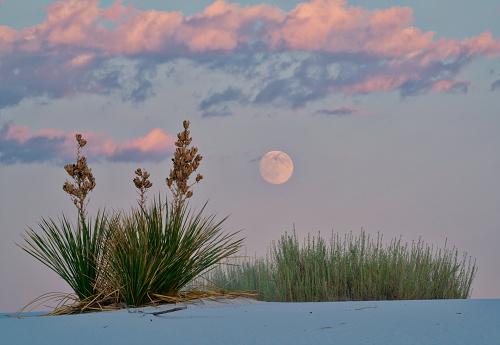 月「Full Moonrise and Yuccas」:スマホ壁紙(6)