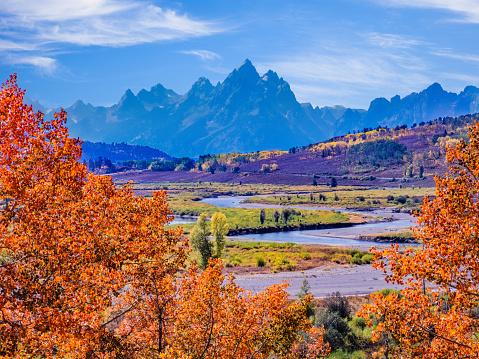 Grand Teton「Snake River with aspens  in Autumn at Grand Teton National Park」:スマホ壁紙(17)