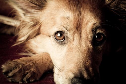 Hunting Dog「Dog begging」:スマホ壁紙(19)