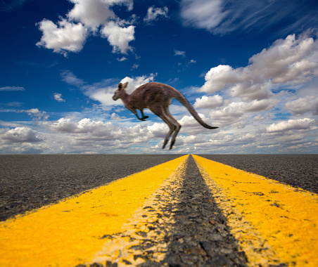 Animal Wildlife「Kangaroo running across highway.」:スマホ壁紙(3)