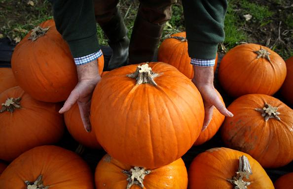 Pumpkin「Halloween Preparation At A Pumpkin Farm」:写真・画像(3)[壁紙.com]