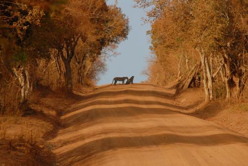 Sri Lanka「Leopards on the road」:スマホ壁紙(18)