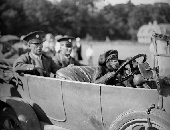 運転手「Cheeky Chauffeur」:写真・画像(11)[壁紙.com]