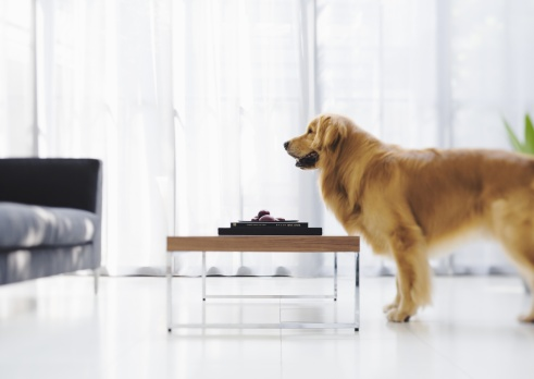 Side View「Dog and table」:スマホ壁紙(0)
