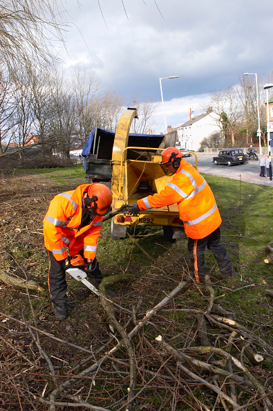 Grass「Tree surgeons sawing and chipping felled branches」:写真・画像(7)[壁紙.com]