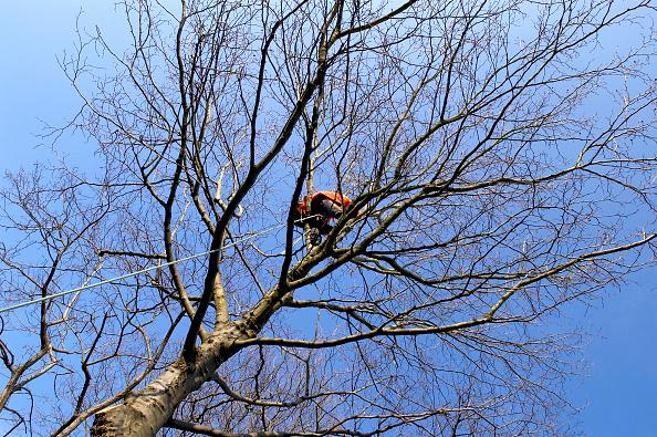 Climbing「Tree surgeon working at height」:写真・画像(5)[壁紙.com]