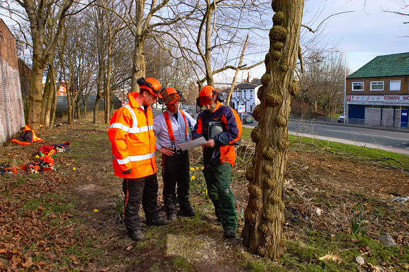 Grass「Tree surgeons discussing plans」:写真・画像(11)[壁紙.com]