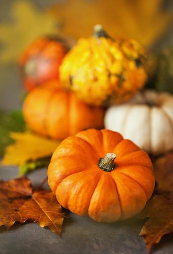 Pumpkin「Decorative various autumnal halloween pumpkins」:スマホ壁紙(10)