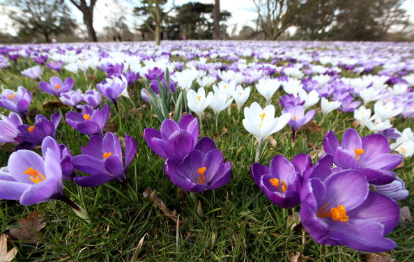 花「The First Signs Of Spring Are Seen At Kew Gardens」:写真・画像(3)[壁紙.com]