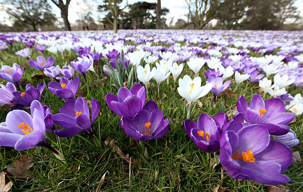 The First Signs Of Spring Are Seen At Kew Gardens:ニュース(壁紙.com)