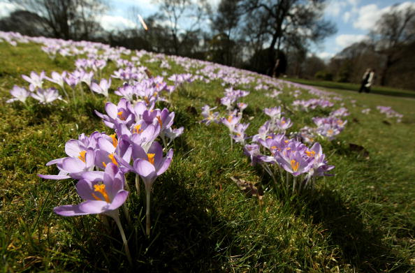 Crocus「The First Signs Of Spring Are Seen At Kew Gardens」:写真・画像(16)[壁紙.com]