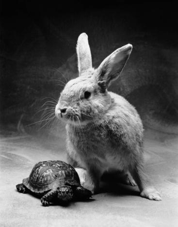 Fairy Tale「The Tortoise and the Hare」:スマホ壁紙(2)