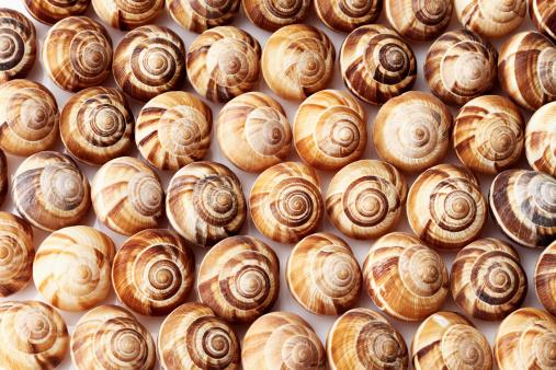 snails「Full frame of shell, close up」:スマホ壁紙(7)
