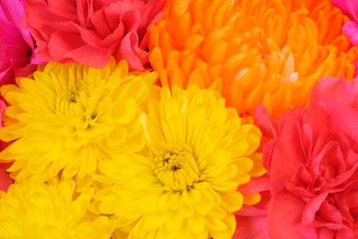 カーネーション「フルフレームの鮮やかな春のフラワーブーケ背景」:スマホ壁紙(15)