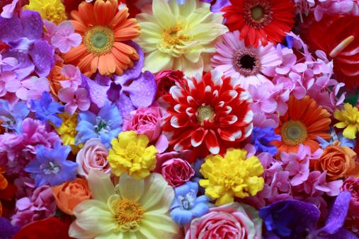 Colorful「Full Frame of Flowers」:スマホ壁紙(4)