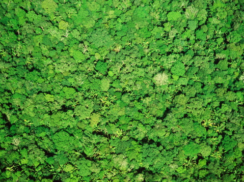 Amazon Rainforest「Full frame aerial view over forest canopy of the Amazon Jungle」:スマホ壁紙(1)
