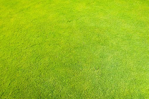 Grass「Full Frame Shot Of Grass」:スマホ壁紙(0)