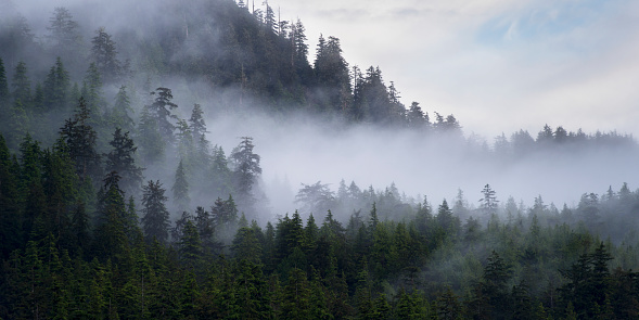 Fog「Fog settled in the forest on a mountainside; Skeena-Queen Charlotte, British Columbia, Canada」:スマホ壁紙(18)