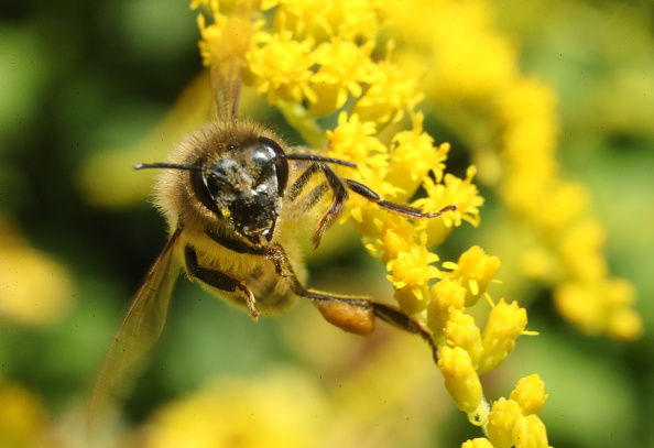 Honey「Germany Counts Its Insects」:写真・画像(7)[壁紙.com]