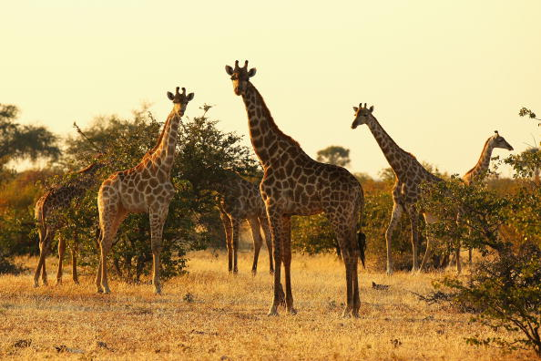 animal「An African Safari」:写真・画像(7)[壁紙.com]