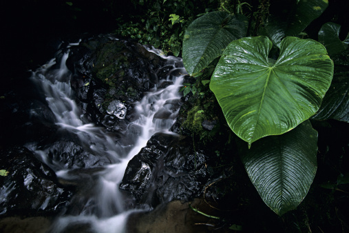 Bolivian Andes「Plant next to small stream, El Pahuma Reserve, Pichincha province, Andes, Eucador」:スマホ壁紙(6)