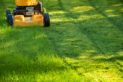 Horticulture「Lawn mower on grass in garden」:スマホ壁紙(13)