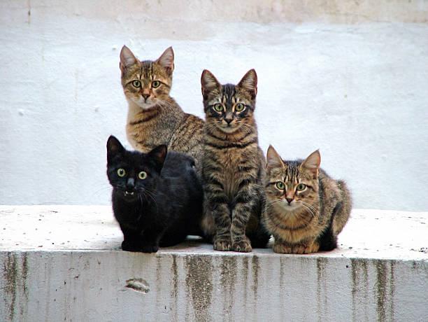 Four kittens posing:スマホ壁紙(壁紙.com)