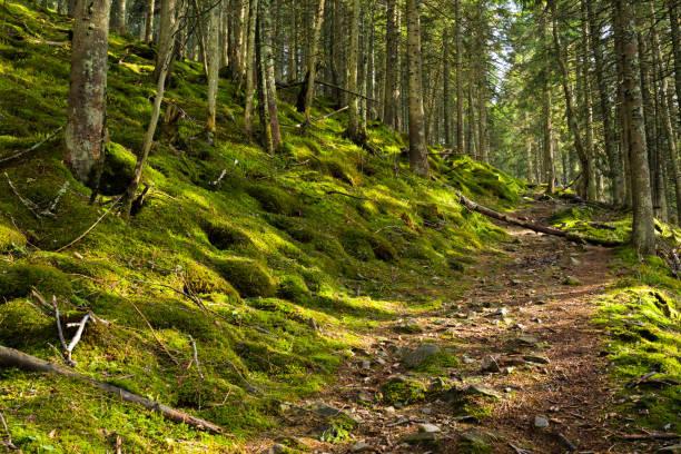 Pathway in a green forest:スマホ壁紙(壁紙.com)