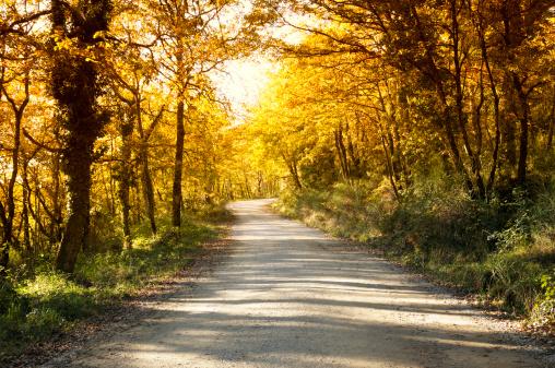 一本道「田園地帯での通路」:スマホ壁紙(19)