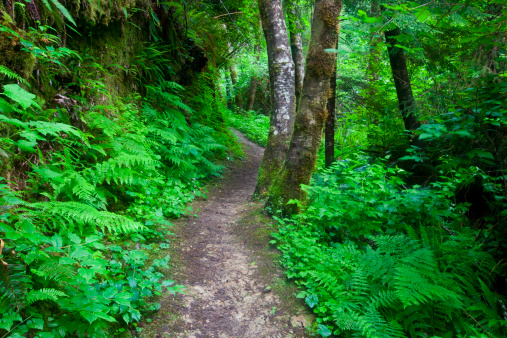 Footpath「Pathway in South Slough near Charleston Oregon 」:スマホ壁紙(13)