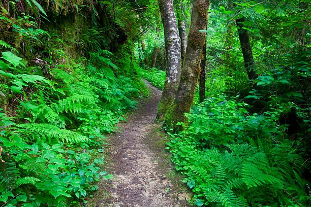 Pathway in South Slough near Charleston Oregon :スマホ壁紙(壁紙.com)
