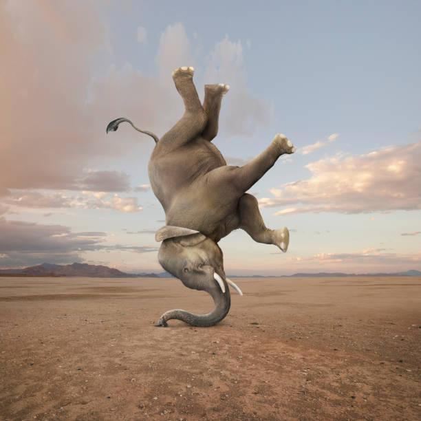 Elephant Skillfully Performing A Headstand:スマホ壁紙(壁紙.com)