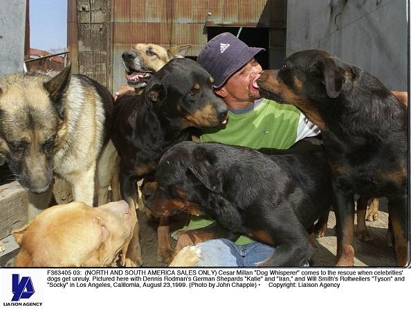 """Green Shirt「Cesar Millan """"Dog Whisperer""""」:写真・画像(16)[壁紙.com]"""