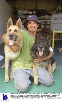 """Green Shirt「Cesar Millan """"Dog Whisperer""""」:写真・画像(10)[壁紙.com]"""