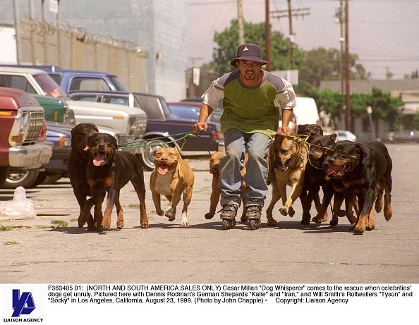 """Green Shirt「Cesar Millan """"Dog Whisperer""""」:写真・画像(18)[壁紙.com]"""