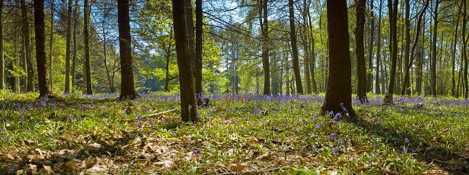 Copse「Flowering forest」:スマホ壁紙(15)