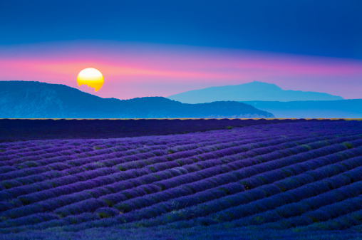French Lavender「Sun setting over lavender field in Provence, France」:スマホ壁紙(11)