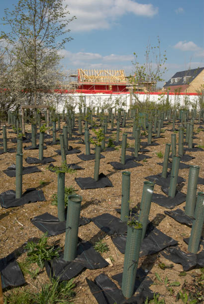 Tree plantation growing near housing development, Cambridge, UK:ニュース(壁紙.com)