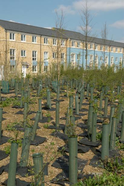 Tree plantation growing near housing development, Cambridge, UK:ニュース(壁紙.com)