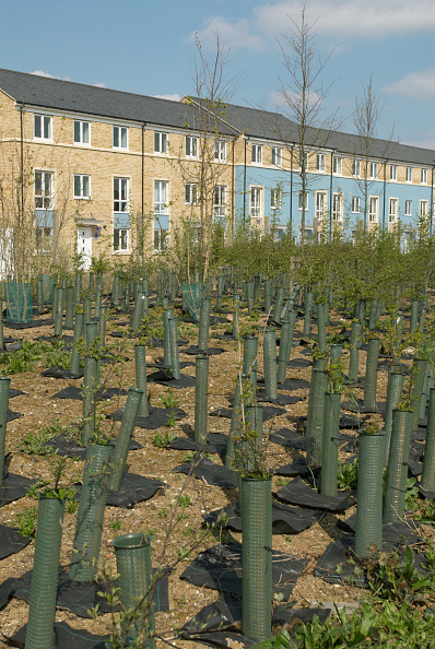 Tree「Tree plantation growing near housing development, Cambridge, UK」:写真・画像(14)[壁紙.com]