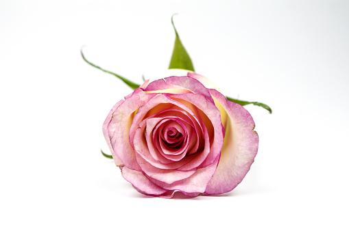 七夕「Champagne roses」:スマホ壁紙(17)