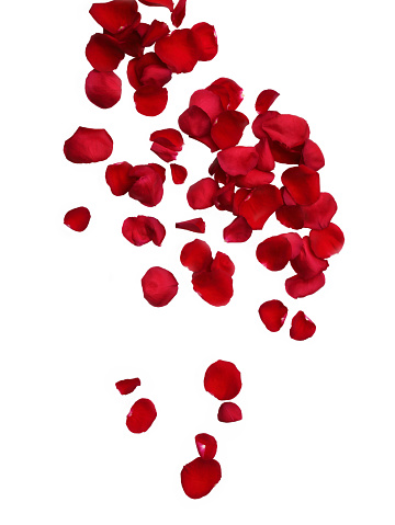 花びら「Falling fragrant red rose petals on white.」:スマホ壁紙(10)