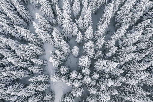 Drone Point of View「Aerial view of pine trees covered with snow」:スマホ壁紙(19)
