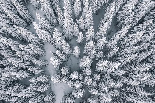 冠雪「雪で覆われた松の木の上空からの眺め」:スマホ壁紙(9)