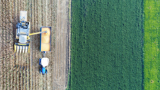 Planting「Aerial view of corn field during harvest」:スマホ壁紙(18)