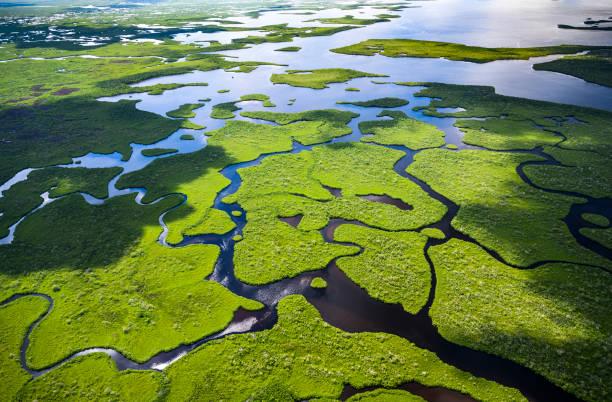 Aerial view of Everglades National Park in Florida, USA:スマホ壁紙(壁紙.com)