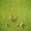 Giraffe壁紙の画像(壁紙.com)