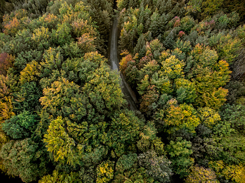 Vaud Canton「Aerial view of road going through forest」:スマホ壁紙(4)