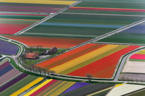 Netherlands「Aerial view of flower fields」:スマホ壁紙(6)