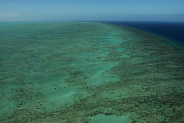 """Environmental Conservation「Great Barrier Reef Threatened With Extinction """"Within 20 Years""""」:写真・画像(3)[壁紙.com]"""